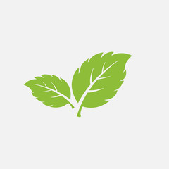 mint leaf element vector icon. green mint leaves vector symbol