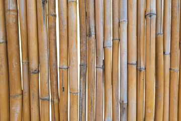 Old brown dry bamboo fence or bamboo wall texture on white background, natural wall background.