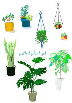 観葉植物,植物,ハンギング,室内,植木,花,葉,セット,バリエーション