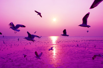 Door stickers Light pink Beautiful nature landscape sunset and birds on the beach.