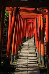 A shrine approach made up of many vibrant scarlet torii gates