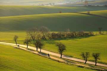 Autumn ripples of green fields crosses narrow road with trees