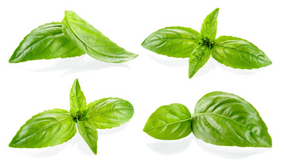 Basil isolated. Basil leaf on white. Basil leaves isolete. Set of basilic.