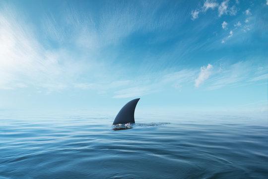 shark fin on surface of ocean agains blue cloudy sky