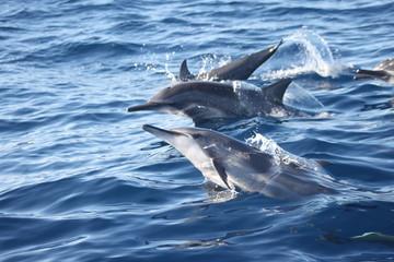 Tuinposter Vissen dauphins