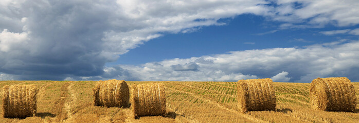 Fototapete - Yellow haystacks, field wheat, blue sky with clouds. Beauty nature, agriculture and seasonal harvest time. Scenic agricultural land. Panoramic banner.