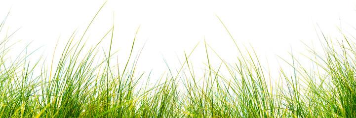 freigestellte grashalme auf weißem hintergrund