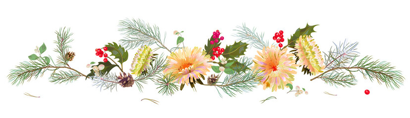 Panoramic view: white chrysanthemum (golden-daisy, aster, daisy), pine branches, cones, holly berry. Horizontal border for Christmas, white background. Botanical illustration, watercolor style, vector