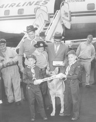 RinTinTin arrives in Washington, D.C. with a group of Boy Scouts on April 9, 1959. -