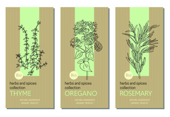 Fototapeta Vector set of herbs and spices labels with herbs sketches: thyme, oregano and rosemary. Packaging template. Healthy food, bio, organic, natural product, kitchen herbs obraz