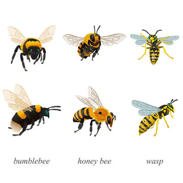 Six poses of bumblebees, bees and wasp insects