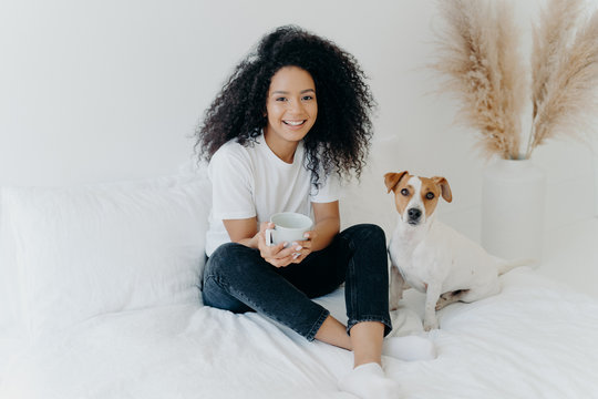 Relaxed attractive Afro American woman drinks aromatic hot drink from white mug, poses on bed together with jack russell terrier dog, enjoy domestic atmosphere, being in cozy bedroom at home