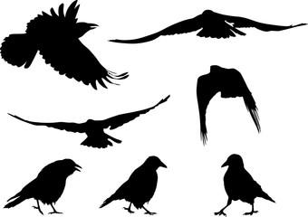 set of seven black crow silhouettes on white