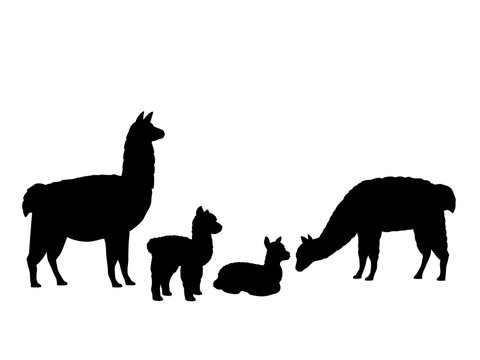 Alpaca Lama family. Silhouettes of animals