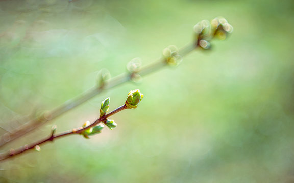 Early spring branch and bud
