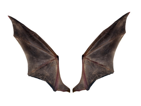 bat wings isolated on white.