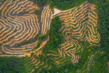 Garden Poster Rice fields Aerial drone image of Deforestation. Aerial drone footage of rain forest (rainforest) destroyed to make way for oil palm plantations