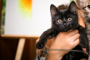 boy holds black kitten in hands. Black kitten 3 months with yellow eyes on background of easel with picture.
