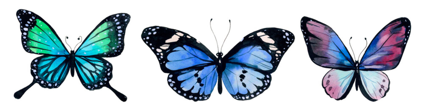 Butterfly watercolor, clipart butterflies