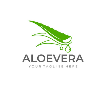 Aloe vera plant logo design. Herbaceous plant and drop vector design. Aloe vera gel logotype