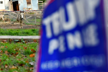 "A donkey faces a ""TRUMP PENCE"" campaign placard placed in the front yard of a residence on election day for local and states in Schuylkill County"
