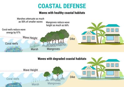 Coastal defenses to sea level rising - mangroves, marshes, coral reefs, dikes
