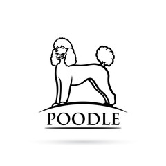 Poodle dog - isolated vector illustration