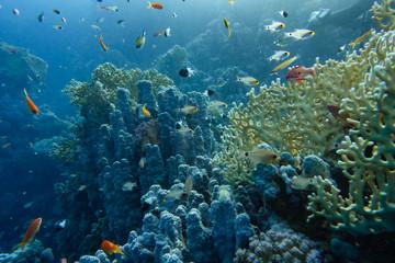 Keuken foto achterwand Koraalriffen Korallenriff mit bunten Fischen