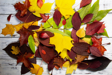 Color autumn leaves on white wooden background