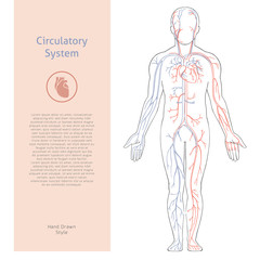 Vector banner template with human circulatory system drawn in retro style with background.