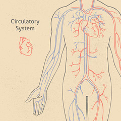 Vector illustration of the human circulatory system drawn in retro style.