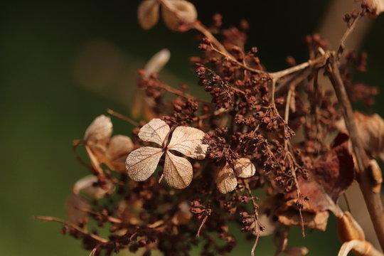 Plant In Longwood Gardens