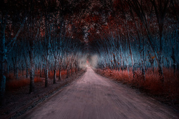 Pathway to the mysterious forest,Fantasy picture