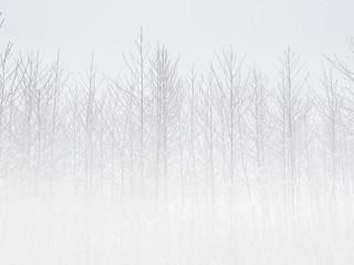 Tło zima