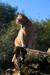 regal yellow tabby cat portrait on top of firewood pile