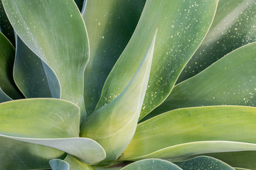Abstract Green Succulent Leaves