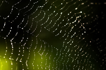 Spider web, trapping spider web. Macro photo of a spider web.
