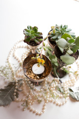 Flat Lay Wedding Pearls and Succulents