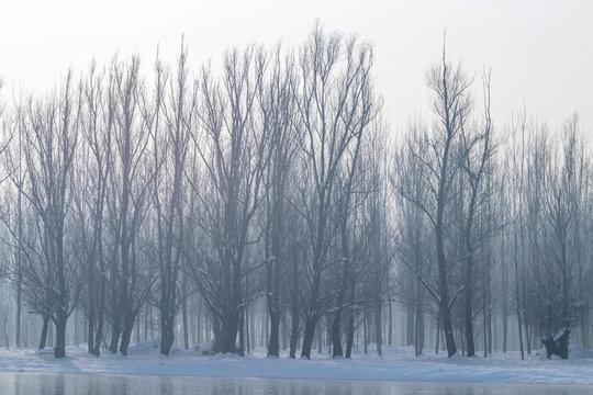 Frozen lake in forest. winter lake under snow