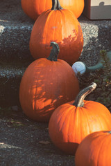 A series of pumpkins are set out as Halloween decorations.