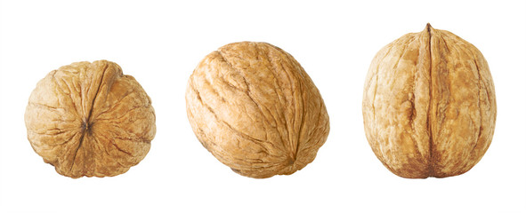 Walnut Collection. Set of Whole Nuts Walnut Isolated on White Background. Full Depth of Field