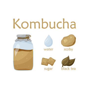 Recipe for healthy kombucha. Flat food vector illustration. Cartoon hand drawn detox tea. Glass jar with scoby and ingredients. Sugar, water, tea, chinese mushroom on white background. Color poster