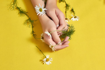 Girl's hands with beautiful Daisy flowers on yellow background. Wall mural