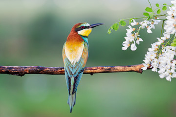 beautiful exotic bird sitting on a branch Fotomurales