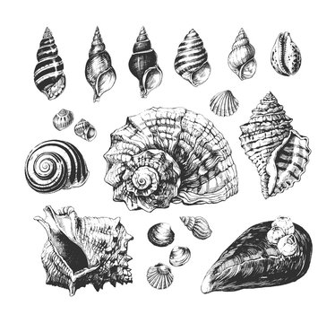Hand drawn collection of various seashells,  illustrations isolated on white