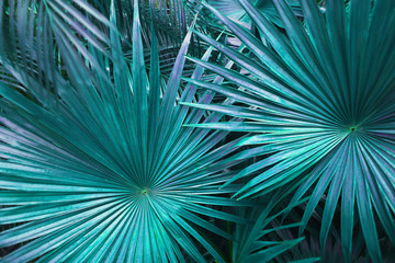Wall Mural - Tropical turquoise palm Leaves in exotic endless summer country