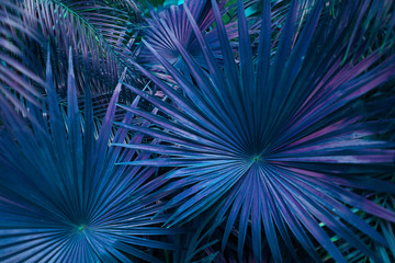 Wall Mural - Tropical blue palm Leaves in exotic endless summer country
