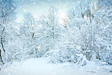 Printed kitchen splashbacks Light blue Winter landscape with snow covered trees in the forest.