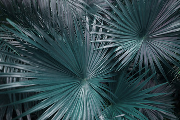 Fotomurales - green palm leafs on tropical country shoot