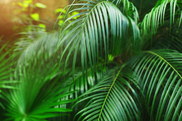 Fotomurales - Tropical bright green palm Leaves with sunlight wallpaper in exotic endless summer country
